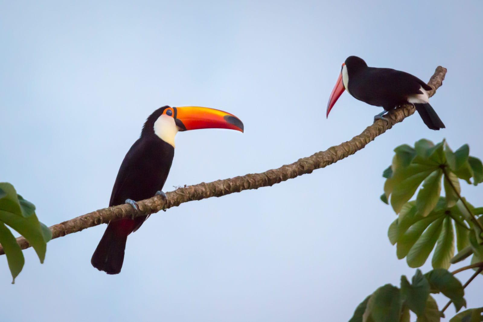 Awasi, Iguazú,Argentina