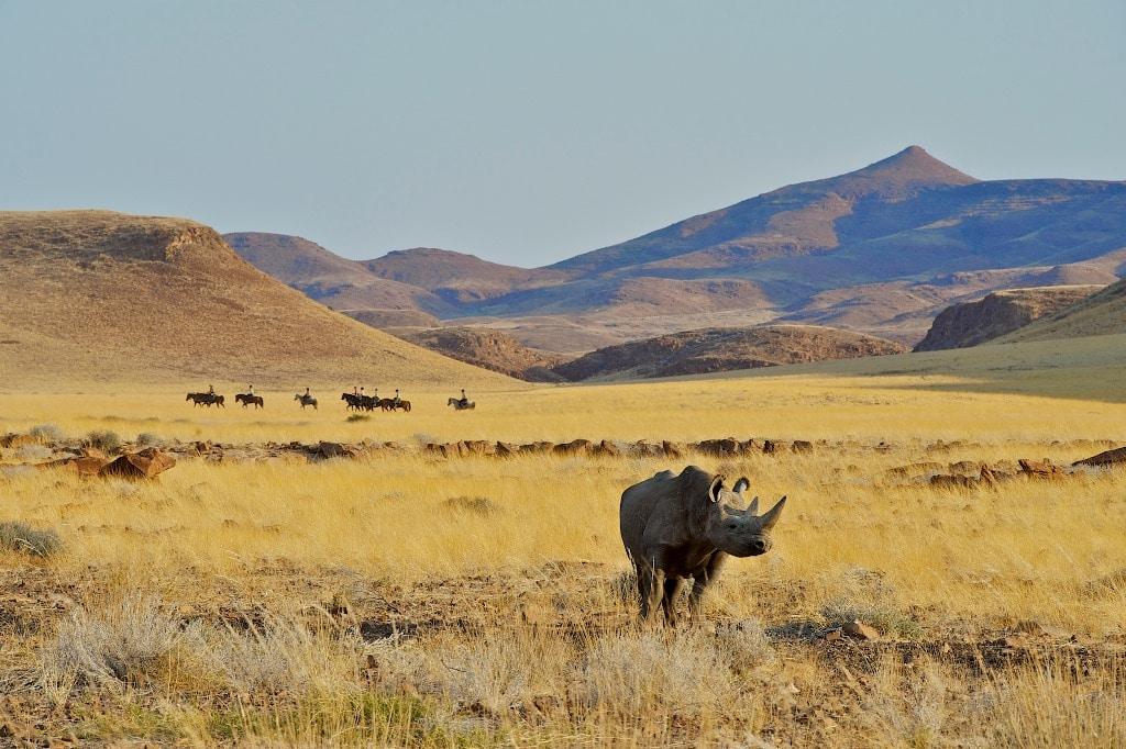 Black Rhino By Athol Moult