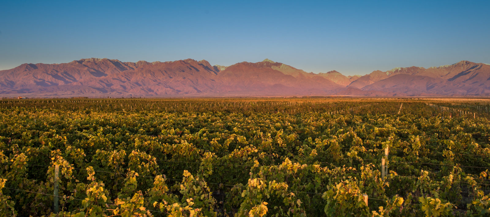 The Vines Of Mendoza, Argentina