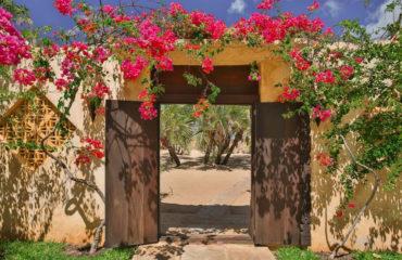 Wazi Dubu Lamu Island Kenya 13