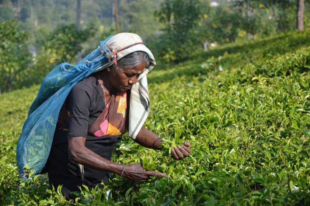 Hill Country, Sri Lanka, Asantha Abeysooriya Benitta8pp8 Unsplash
