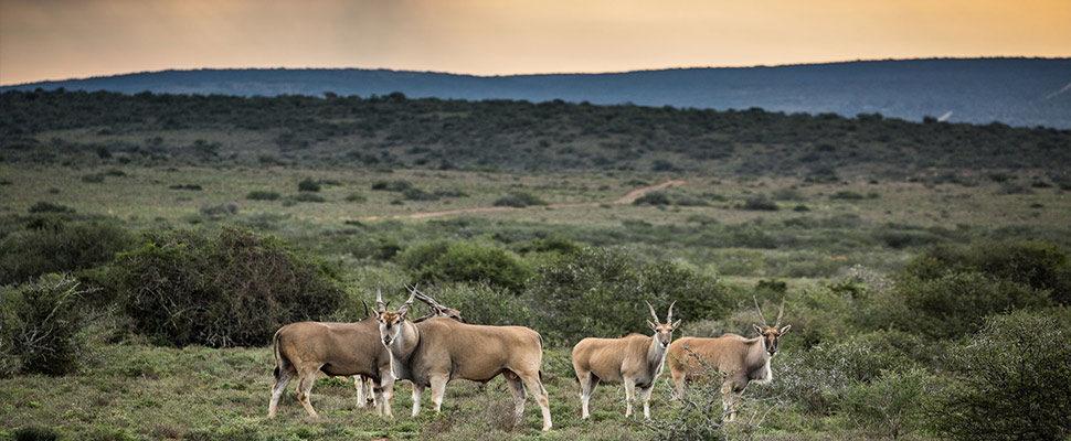 Eastern Cape 6