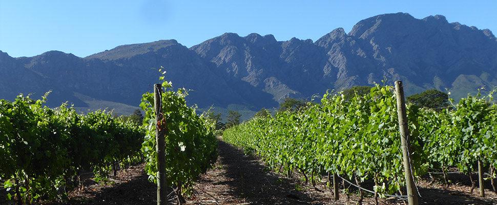 Western Cape 5