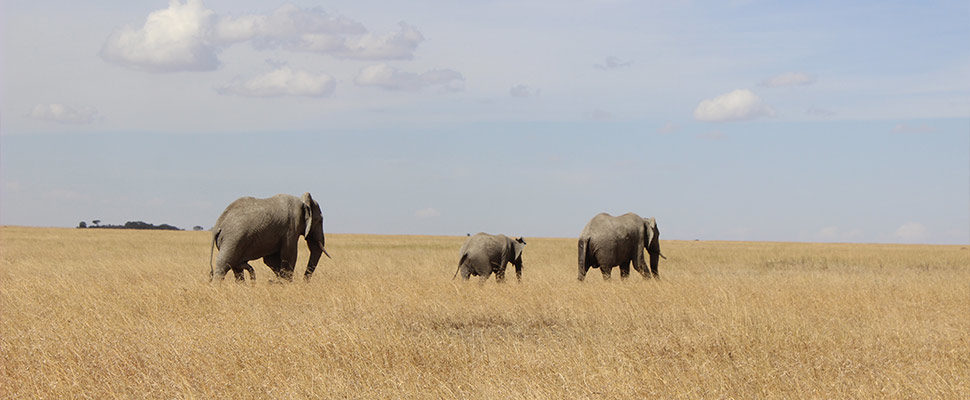 Serengeti5