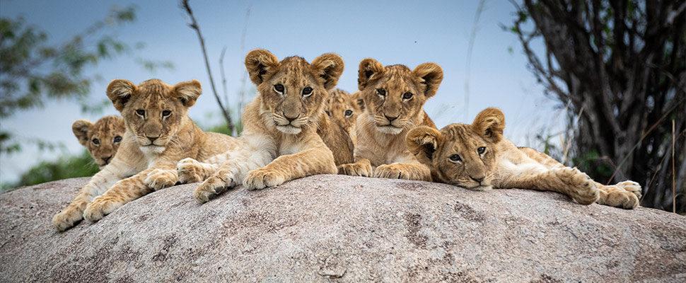 Serengeti6