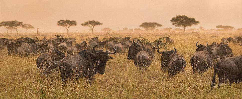 Serengeti7