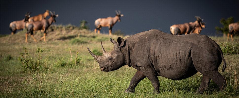 Serengeti8