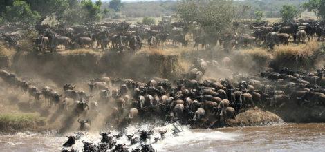 Serengeti9