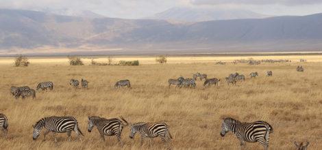 Ngorongoro Crater Lodge15