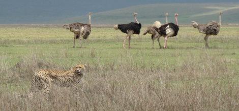 Ngorongoro Crater Lodge16