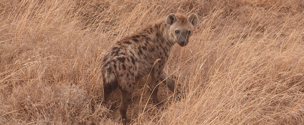 Ngorongoro Crater Lodge17
